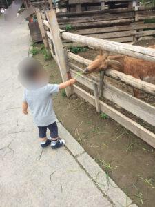 群馬サファリ 2歳 3歳 ブログ