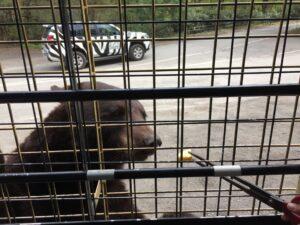 富士サファリパーク 熊 餌やり くま ブログ 子連れ旅行記